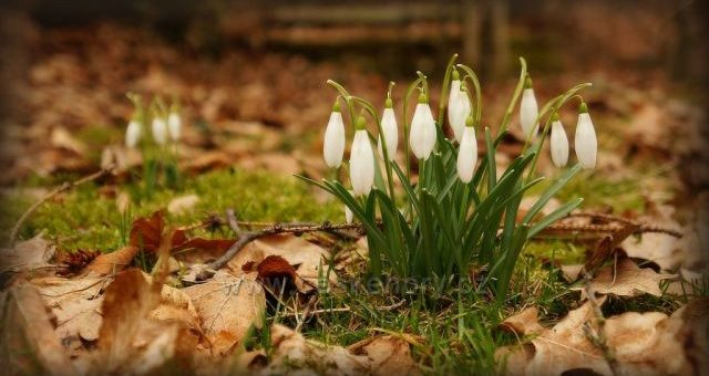 Jak s dětmi přivítat jaro?
