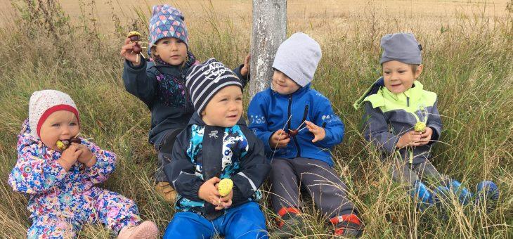 Lesní dopoledne- kroužek pro děti 2,5-6 let